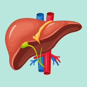 There Are Many Causes Of Chronic Liver Disease, But Alcohol Is One Of The Most Common